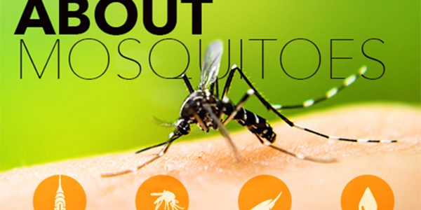 The Buzz about Mosquito Protection